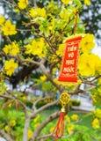 Las flores del Año Nuevo vietnamita tradicional Imágenes de archivo libres de regalías