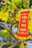 Las flores del Año Nuevo vietnamita tradicional Foto de archivo libre de regalías