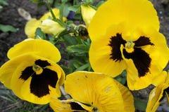 Las flores del amarillo Imagen de archivo