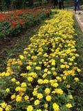 Las flores del amarillo en el jardín Imagen de archivo