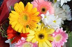 Las flores del aster, del gerbera y de la margarita amarillean rojo y rosado con descensos del agua Imagen de archivo libre de regalías