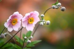 Las flores del color de rosa Imagen de archivo