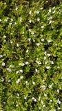 Las flores del flor foto de archivo