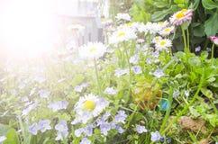 Las flores del jardín se cierran para arriba debajo del sol brillante plantas para el fondo o el papel pintado imagenes de archivo