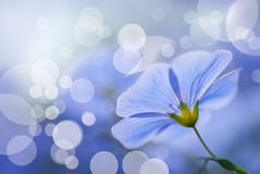 Las flores del lino se cierran Imagen de archivo libre de regalías