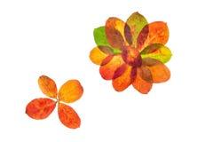 Las flores del otoño Fotos de archivo libres de regalías