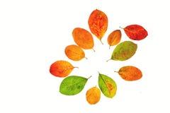 Las flores del otoño Imagen de archivo libre de regalías