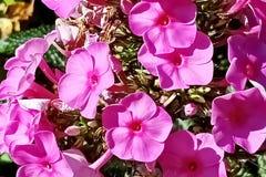 Las flores del otoño se cierran encima de opiniones imagen de archivo