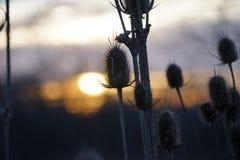Las flores del prado para arriba se cierran en la salida del sol Foto de archivo libre de regalías