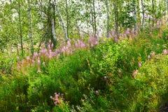 Las flores en el bosque Fotografía de archivo