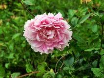 Las flores en el bosque en el centro parquean Nottingham Reino Unido Foto de archivo
