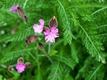 Las flores en el bosque en el centro parquean Nottingham Reino Unido Fotografía de archivo