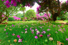 Las flores en el césped Fotos de archivo libres de regalías