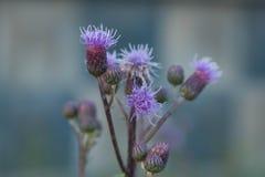 Las flores en el campo imagenes de archivo