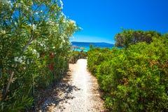 Las flores en el delle Bombarde de Spiaggia varan cerca de Alghero, Cerdeña, Italia Foto de archivo libre de regalías