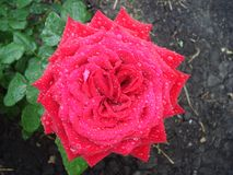 Las flores en el jardín fotografía de archivo