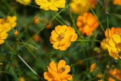 Las flores en el jardín Fotos de archivo libres de regalías