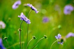 Las flores en el prado Fotografía de archivo