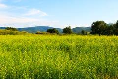 Las flores en el prado Fotografía de archivo libre de regalías