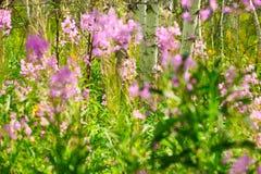 Las flores en el prado Imágenes de archivo libres de regalías