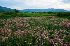 Las flores en el prado Imagen de archivo libre de regalías