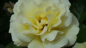 Las flores en la floración Imagen de archivo libre de regalías