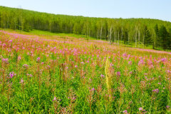 Las flores en la ladera Imagen de archivo libre de regalías