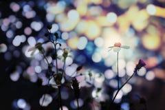 Las flores en la luz de Bokeh Fotos de archivo libres de regalías