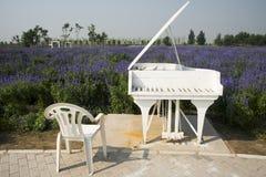 Las flores en la plena floración, el piano blanco y la silla imágenes de archivo libres de regalías