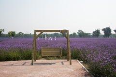 Las flores en la plena floración, silla colgante fotografía de archivo libre de regalías