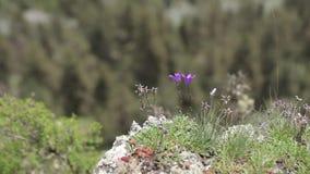 Las flores en las piedras florecen, naturaleza, blanco, salud, natural, se relajan, resumen almacen de video