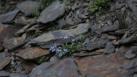 Las flores en las piedras florecen, naturaleza, blanco, salud, natural, se relajan, resumen almacen de metraje de vídeo