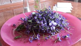 Las flores en su plat Imagen de archivo libre de regalías