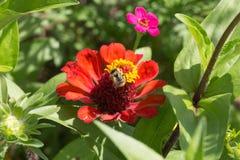 Las flores en verano rural cultivan un huerto en campo alemán Fotografía de archivo