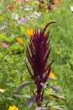 Las flores en verano rural cultivan un huerto en campo alemán Foto de archivo