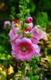 Las flores están floreciendo Imagen de archivo
