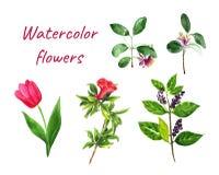 Las flores fijaron la granada, feijoa, tulipán, baya ilustración del vector
