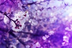 Las flores florecientes fantásticas de la primavera se destacan en una rama Dramati Foto de archivo