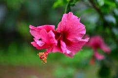 Las flores, flores, flor, deflowers, los safflowers, seguidores, alazor, girasoles, mayflowers, seguidor, sunf Foto de archivo