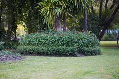 Las flores forran en la base del árbol en fondo del jardín imágenes de archivo libres de regalías