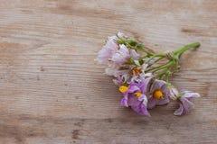 Las flores frescas amarillas púrpuras de la patata están en la tabla de madera Imagen de archivo libre de regalías
