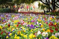 Las flores frescas coloridas en una primavera verde soleada cultivan un huerto imagen de archivo libre de regalías