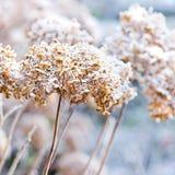 Las flores heladas del invierno imagen de archivo libre de regalías