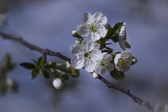 Las flores hermosas brillantes crean un humor de la primavera fotos de archivo