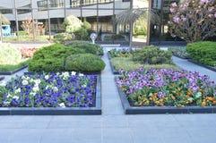 Las flores hermosas crecen en camas de flor imágenes de archivo libres de regalías