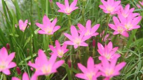 Las flores hermosas en el parque almacen de metraje de vídeo