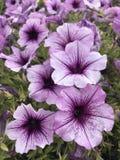 Las flores hermosas hacen un día hermoso Fotos de archivo libres de regalías