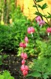 Las flores hermosas saltan jardín en un día soleado imagenes de archivo
