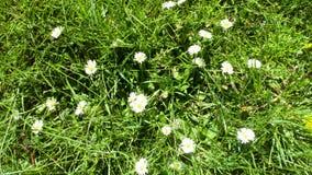 Las flores hermosas son creación del natura de la naturaleza fotografía de archivo libre de regalías