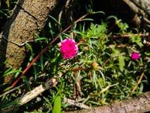 Las flores hermosas son el nature& x27; vida de s fotos de archivo